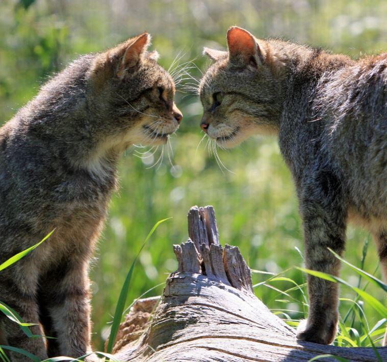 고양이 마주 2