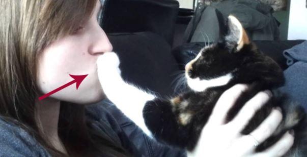 고양이 뽀뽀