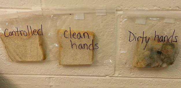 손 씻기 식빵 2